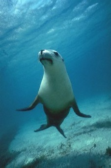 /image/upload/welshzoo1/Sealion341.jpg